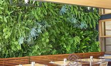 Lắp đặt tường cây chuyên nghiệp tại Việt Nam