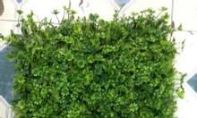 Bán cỏ nhựa tấm ốp tường, dán tường, backdrop đẹp