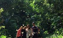 Tour trải nghiệm mùa bướm Cúc Phương 15/4 cho cả gia đình