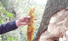 Nguồn mật ong rừng nguyên chất 100% Đak Lak