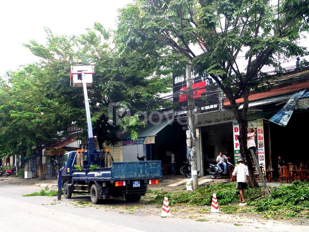 Dịch vụ cưa cây, cắt cây tại Hà Nội uy tín, nhanh gọn giá rẻ