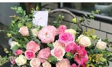 Hoa chúc mừng, hoa khai trương - Nắng tháng giêng