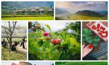 Tour 30-4: du lịch Mai Châu - Mộc Châu 3n2đ