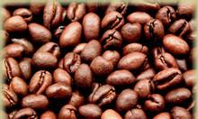 Chuyên cung cấp cà phê hạt nguyên chất giá sỉ