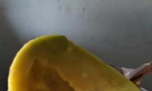 Bơ sáp, bơ booth Đắk Lắk - bơ trái vụ