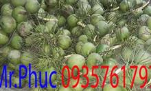 Chuyên cung cấp dừa xiêm xanh tươi khắp các tỉnh thành