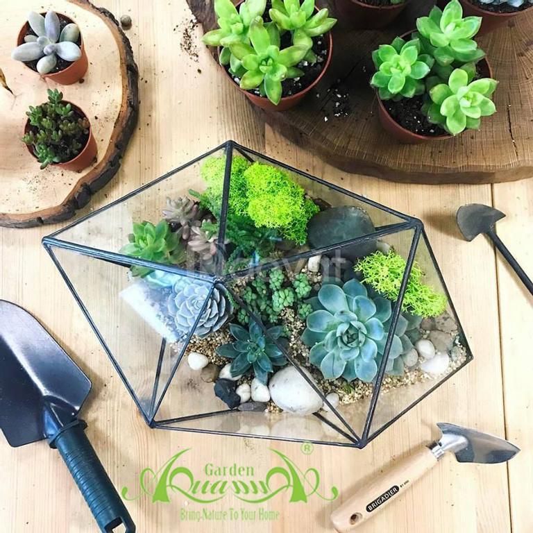 Thỏa sức sáng tạo cùng Terrarium AquaGarden