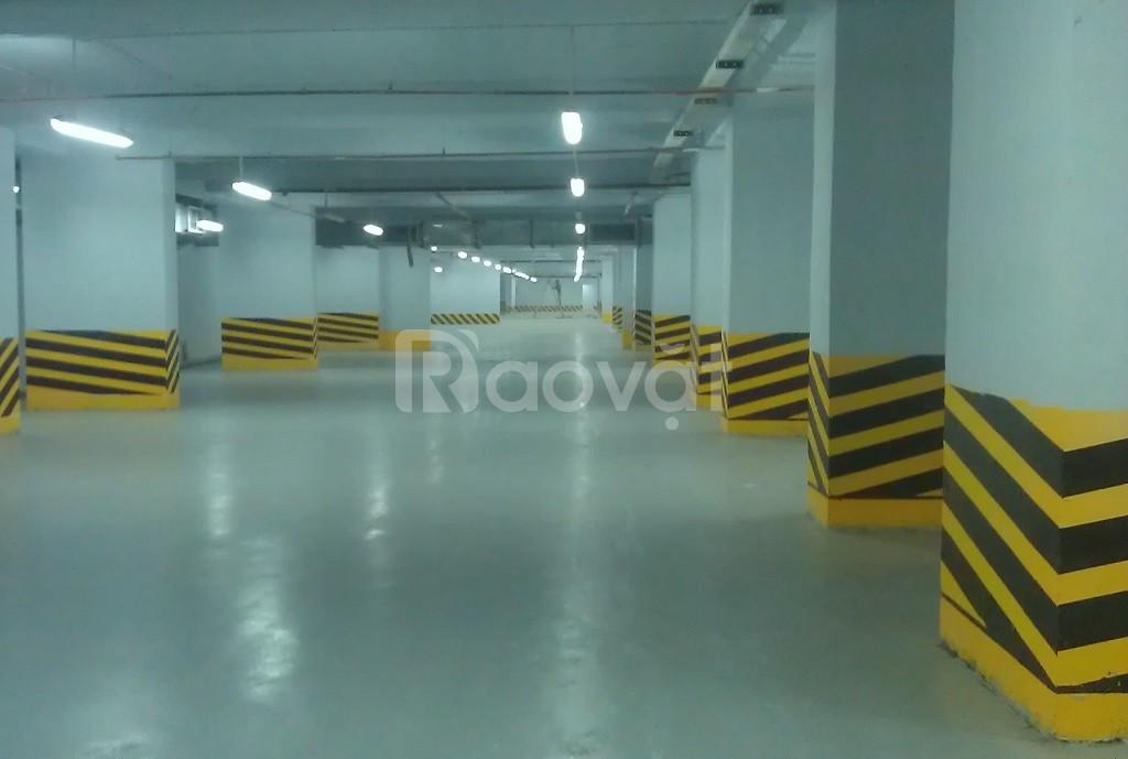 Địa chỉ bán sơn phản quang Seamaster cho tầng hầm tại Vũng Tàu (ảnh 2)