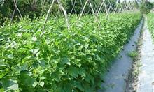 Cung cấp màng phủ nông nghiệp