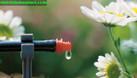 Tưới nhỏ giọt nông nghiệp, tưới nhỏ giọt Hà Nội, tưới nhỏ giọt 8 tia (ảnh 6)