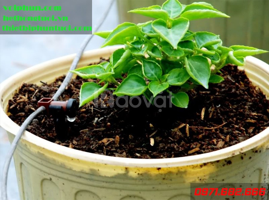 Tưới nhỏ giọt nông nghiệp, tưới nhỏ giọt Hà Nội, tưới nhỏ giọt 8 tia (ảnh 1)