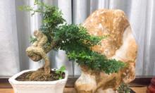 (HCM) Đá cảnh thiên nhiên nữ hoa vàng - 16kg - 38x29cm