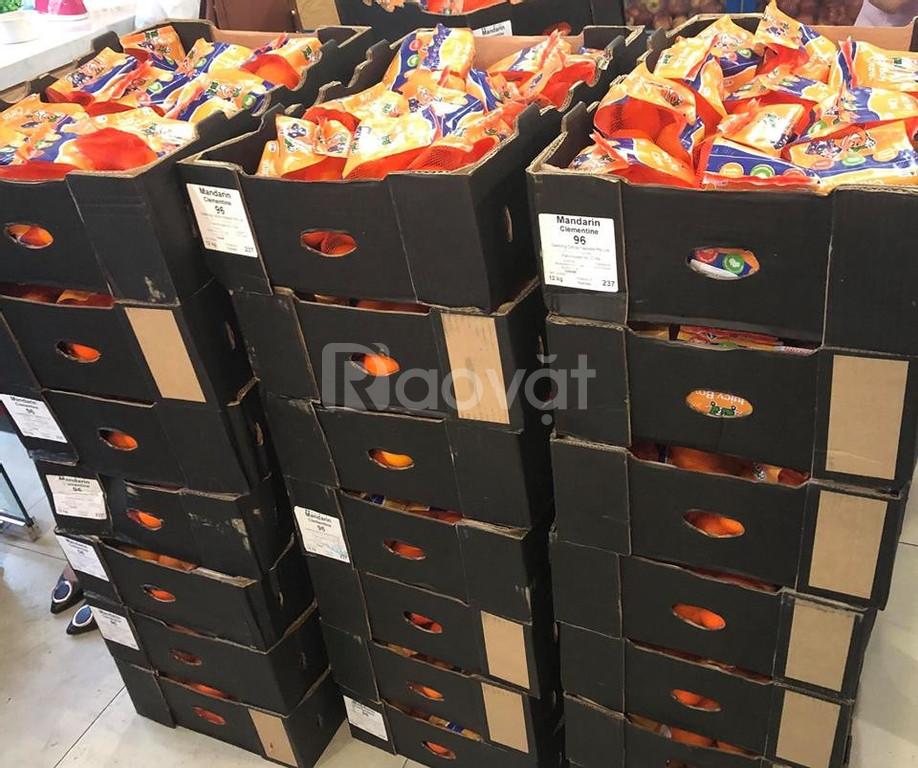 Quýt Úc không hạt Clementine nhập khẩu trực tiếp, hàng air