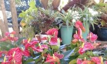 Cây kiểng đẹp đẹp tại TPHCM, Bình Dương