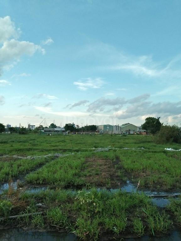 Bán đất thổ cư đường Nguyễn Thị Tú (ảnh 4)