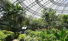 Vườn bướm Thái Lan Butterfly Garden - Điểm đến tuyệt vời cho mùa hè