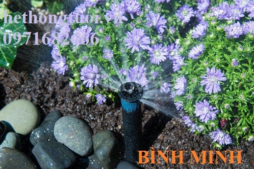 Hệ thống tưới cảnh quan, hệ thống tưới sân vườn, hệ thống tưới cây