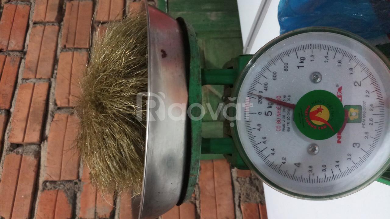 Cần bán cát lợn nặng khoảng 300g