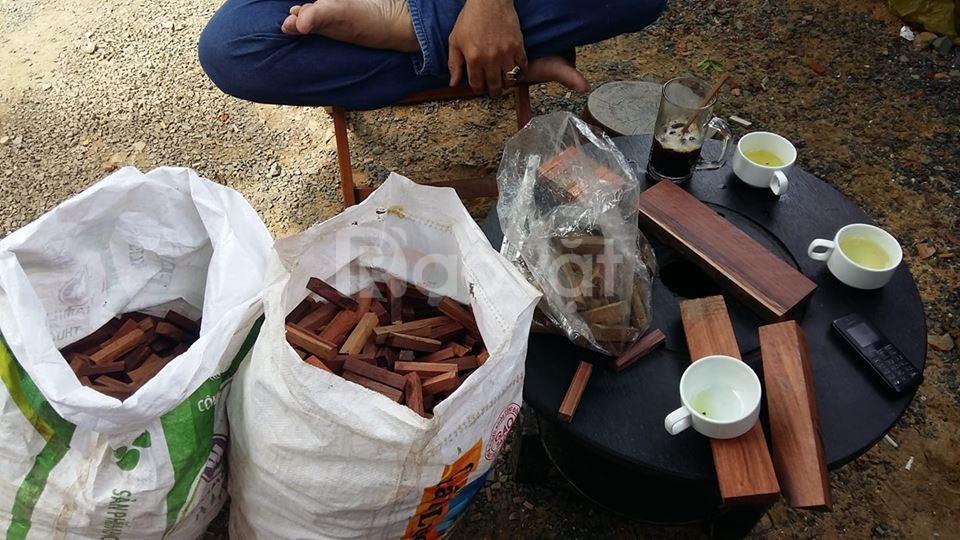 Phôi gỗ mini bách xanh giá rẻ (ảnh 1)