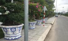 Cơ sở chậu hoa dán miễng Thế Sơn