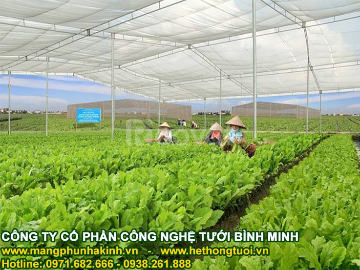 Công nghệ trồng rau của Israel tại Hà Tĩnh, công nghệ trồng rau quả