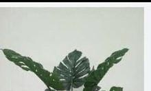 Cây xanh nhựa, cây hoa giả