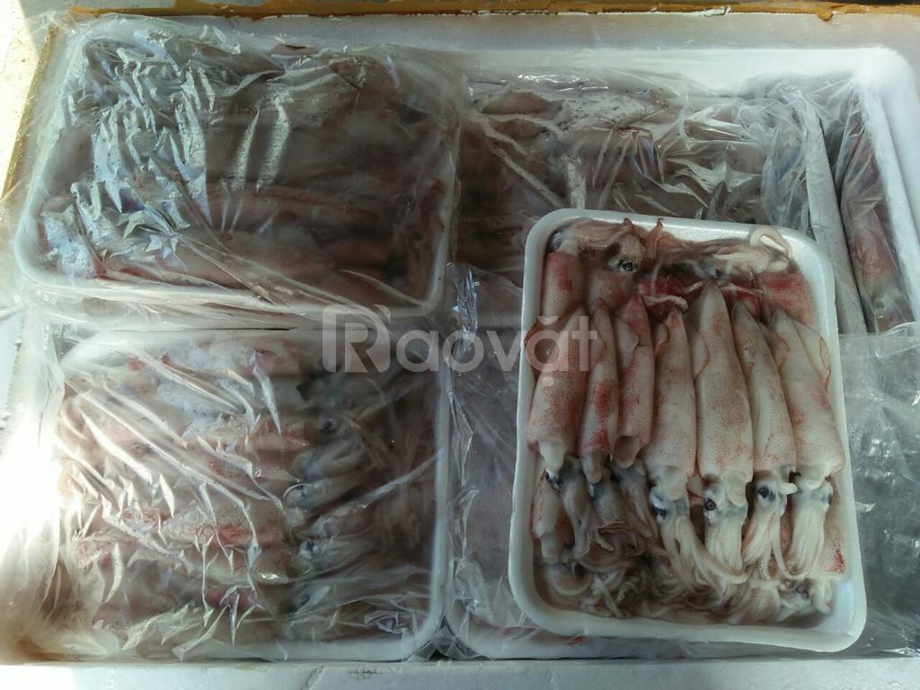 Chuyên cung cấp mực ống câu - thực phẩm Dfood