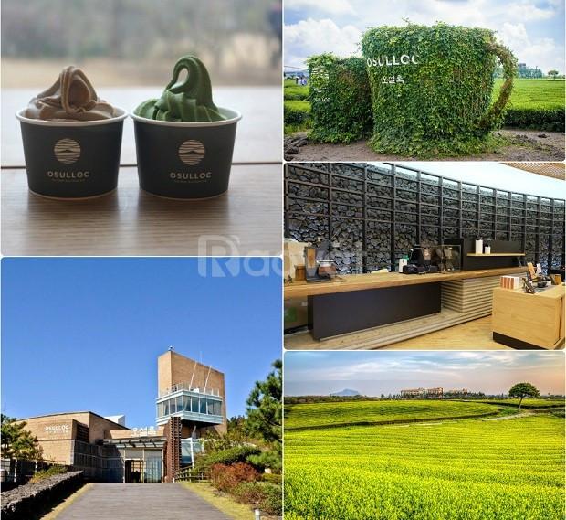 Du lịch Hàn Quốc mùa thu: Jeju đảo thiên đường 4N3Đ