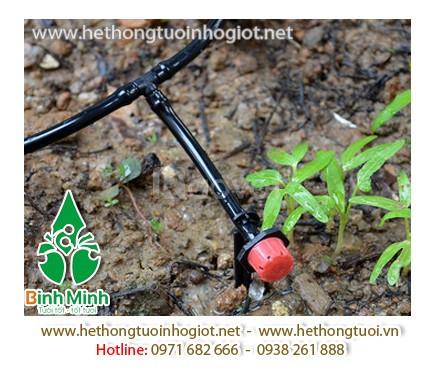 Tưới nhỏ giọt, mô hình tưới nhỏ giọt, hệ thống tưới nhỏ giọt cho cây