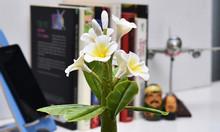 Chậu cây khảm trai cao cấp Gardenia