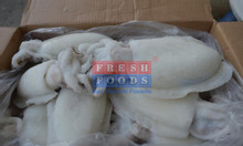 Mực nang SCLS size 300-500gr, 500 up số lượng lớn giá tốt
