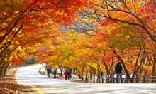 Tour Hàn Quốc 5N4D Seoul-Nami-Namsan-Everland