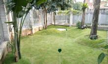Thi công mini golf cỏ tự nhiên