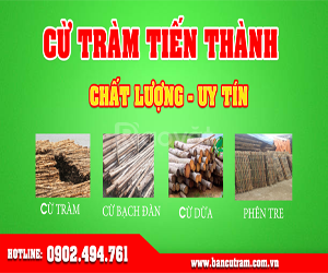 Tiến Thành chuyên bán cừ tràm tại TPHCM giá rẻ uy tín (ảnh 3)