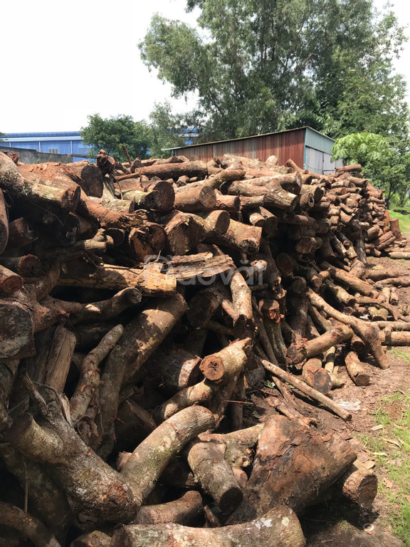 Cung cấp củi cao su, củi điều, củi rừng, củi băm, than indo đốt lò