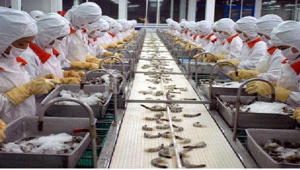 Tuyển 18 nữ làm chế biến thủy sản tại Ibaraki Nhật Bản