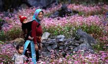 Lạc trôi vào cánh đồng hoa tam giác mạch Hà Giang 3 ngày 2 đêm