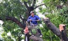 Dịch vụ cưa cây, cắt cây tại Hà Nội uy tín, chuyên nghiệp, giá rẻ