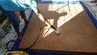 Dịch vụ vệ sinh nệm ngủ ghế sofa ghế văn phòng (ảnh 5)