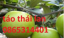 Bán giống táo Thái Lan chuẩn giống, cây giống khỏe mạnh sạch bệnh