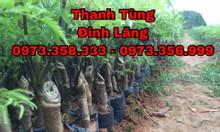 Chuyên bán các loại giống cây dược liệu, cây lâm nghiệp, cây ăn quả
