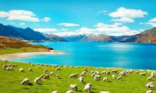 Kinh nghiệm xin visa du lịch New Zealand