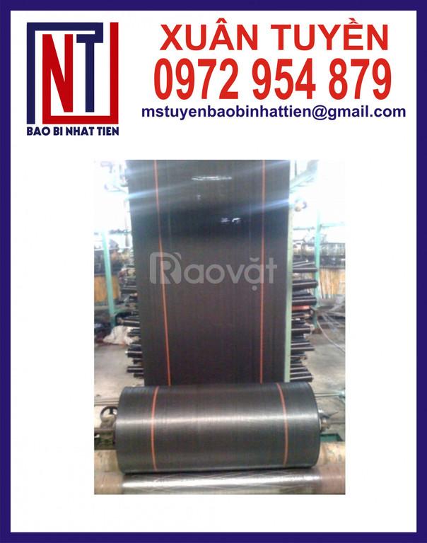 Đơn vị sản xuất cuộn PP dệt dạng manh và dạng ống (ảnh 6)