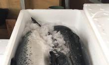 Cá Hồi Nauy nguyên con nhập khẩu