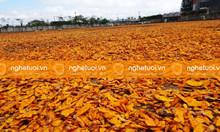 Cung cấp nghệ khô thái lát, nghệ khô nguyên củ số lượng lớn
