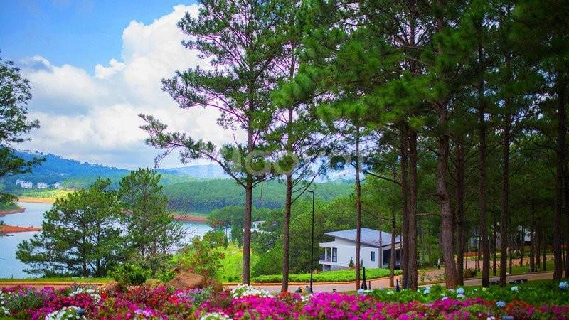 Tour Bảo Lộc - Đà Lạt (4n3đ) Tết Kỷ Hợi 2019