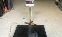 Cân điện tử - cân sàn TPS DH 500kg 1tấn 2tấn 3tấn