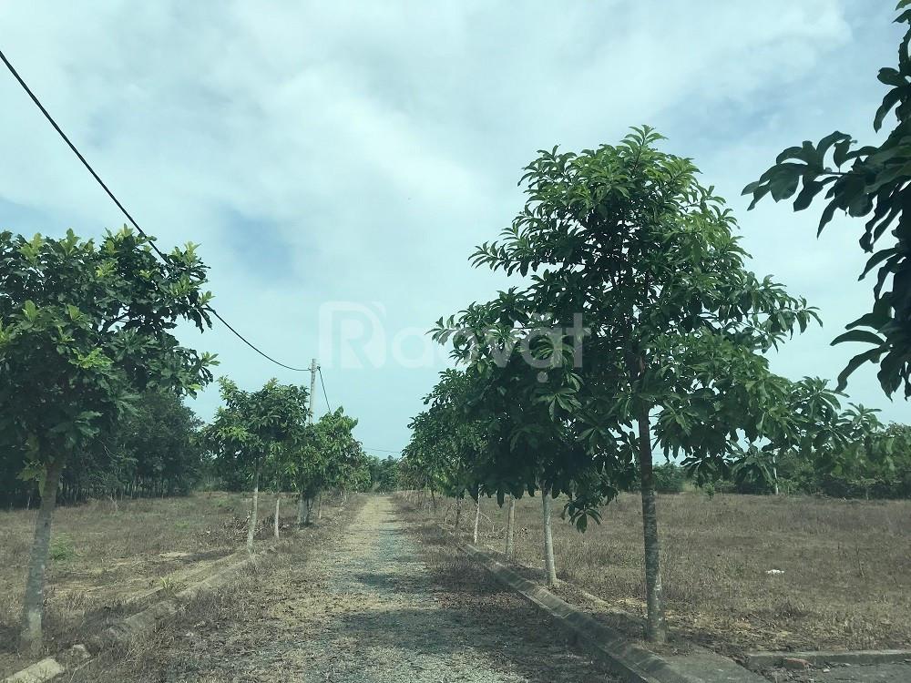 Cần bán 10300 m2 đất Bàu Cạn đã phân lô chỉ 2.2 triệu/m2
