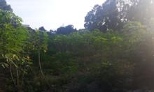 Tôi cần bán lô đất 2212 m2 trung tâm xã Tân Hiệp chỉ 2 triệu/m2