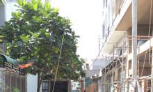 Bán lô đất HXH Lê Trọng Tấn -Tây Thạnh - Tân Phú